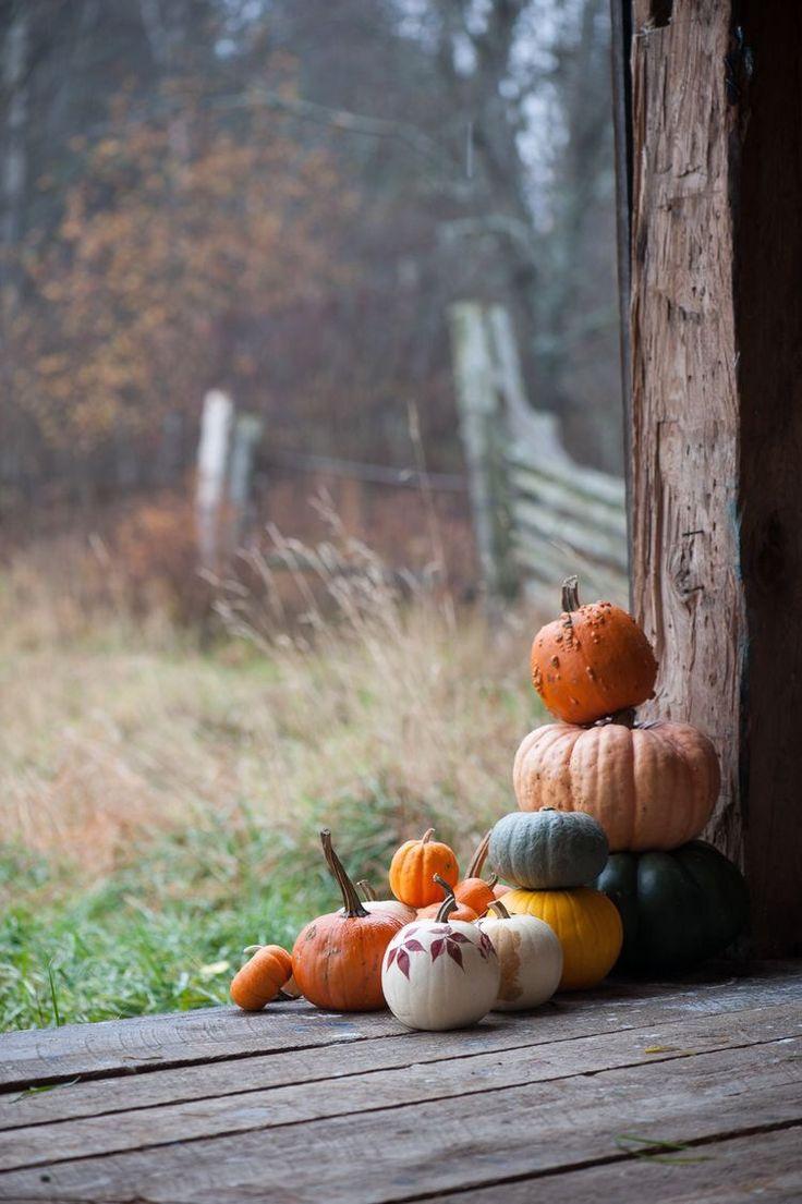   September   Pumpkins, Gourds & Misty Mornings