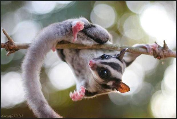 Looks like my boys who love hanging upside down