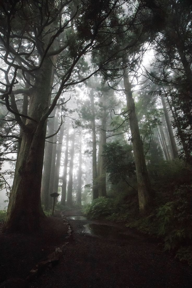 The road of ancient cedars - A scary walk in a foggy, rainy day