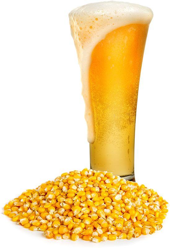 Corn Maize In Beer