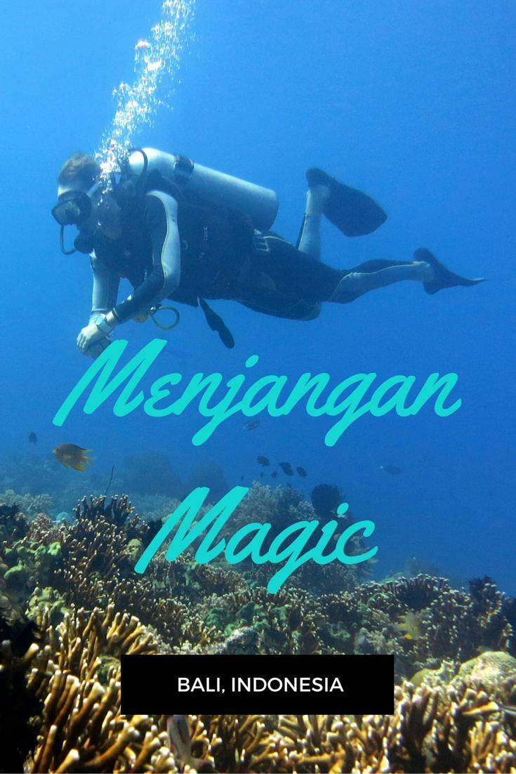 Best 25 diving videos ideas on pinterest what is scuba diving scuba diving video in menjangan island bali one of the best scuba diving destinations xflitez Images
