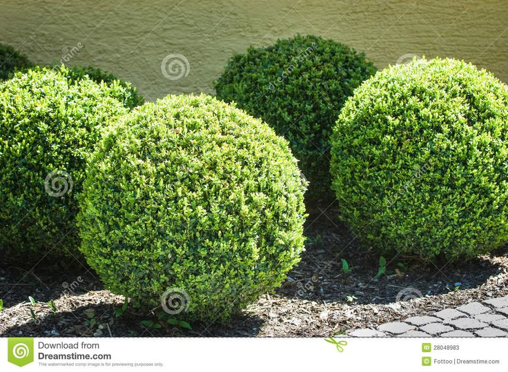 17 Best Images About Bushes Shrubs And Plants On