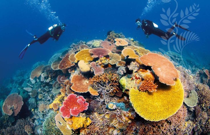 Join the fight to save The Great Barrier Reef. #savethereef