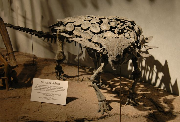 Fossil skeleton of Gargoyleosaurus parkpinorum taken in 2007 at the Denver Museum of Nature and Science.