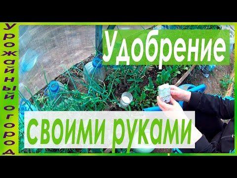 СУПЕР УДОБРЕНИЕ ИЗ ДРОЖЖЕЙ СВОИМИ РУКАМИ!!! - YouTube