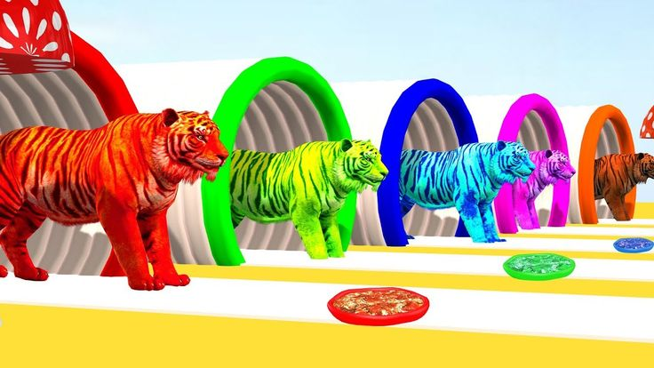 Learn Colors with  Tiger Eat Pizza Color   Learn Animals Nursery Rhymes ...