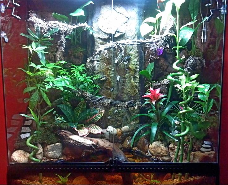 how to create a terrarium for frogs