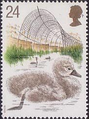 Swans 24p Stamp (1993) Cygnet and Decoy