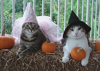 ...: Autumn Cats, Kitty Cats, Halloween Witches, Halloween Cats 2 Closed, Cats Costumes, Costumed Cats, Halloween Cats Closed, Cats Halloween, Fall Cats