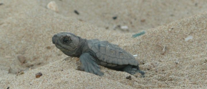 Turtle Conservation in Greece