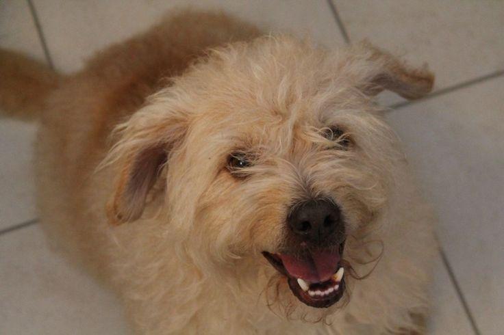 Smilin' Rufie / Rufie sorridente