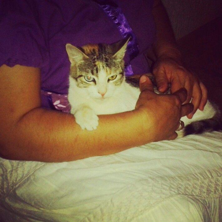 Un lindo gatito ;)