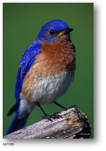 Every time I'm out and I see a bluebird I feel like Gran is right there with me.
