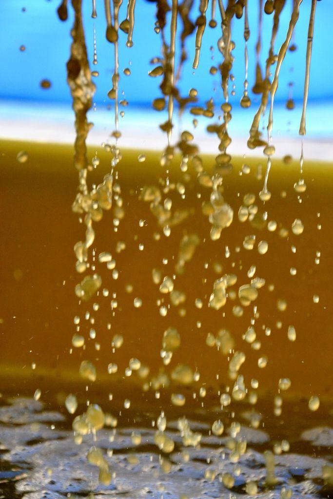 wine must # grape # wine producer  # white wine # www.cabiancadellabbadessa.it # white pinot #