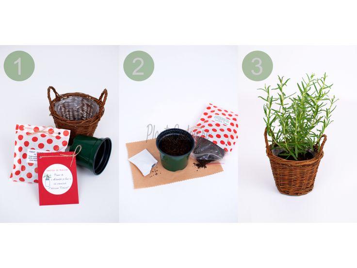 Kit pentru Plante Aromatice - Kit-uri de plantat/Seminte - Craciun - Colectii plante si flori - Plante Cadou