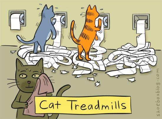 Cat Treadmills by Smithees via Shoebox: Cats, Animals, Cattreadmills, Funny Stuff, Crazy Cat, Humor, Cat Lady