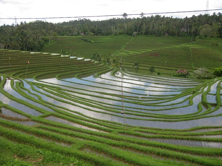 Swept away in every green rice terraces