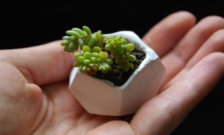 Succulents work great in little pots and unusual containers.  Here's a DIY Mini Planter for Succulents