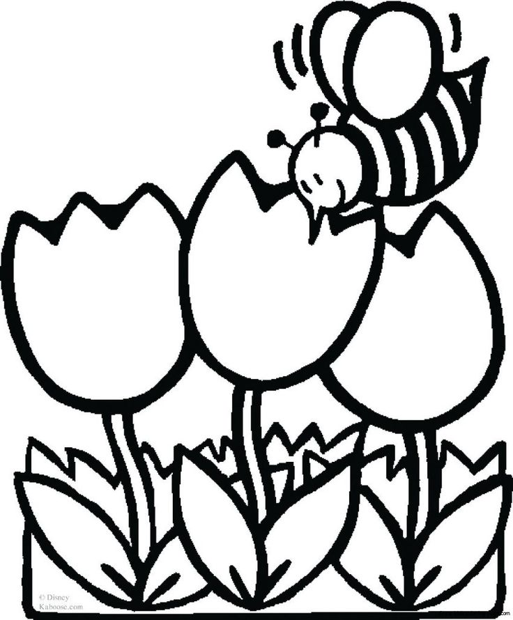 images for tulip flower coloring page - Coloring Page For Kindergarten