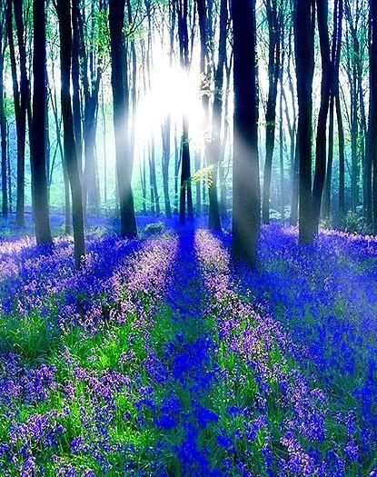 詩集 月下の道 imuruta-dream4   20 真夏の夜の夢