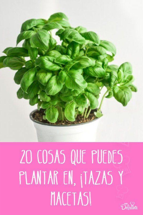 20 flores, chiles, vegetales y hierbas que puedes plantar en, ¡tazas y macetas! Outdoor Gardens, Helpful Hints, Garden Design, Backyard, Patio, Eco Friendly, Cactus, Flora, Herbs