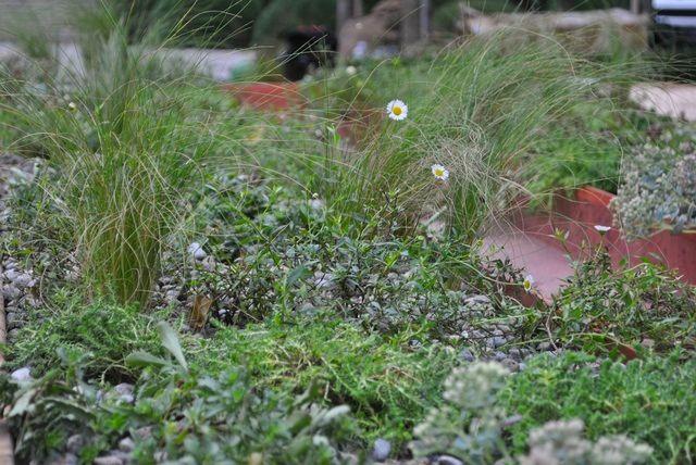Table planted with drought-tolerant perennials for Desco al Fresco, Orticolario 2013. Design: Anna Piussi