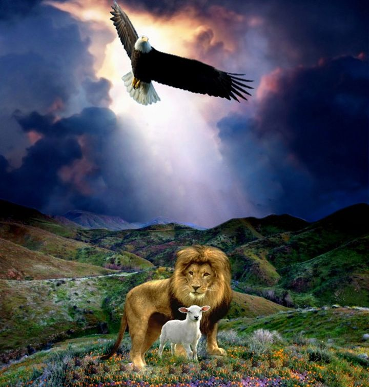 237 Best Lion Of The Tribe Of Judah Images On Pinterest The Lion