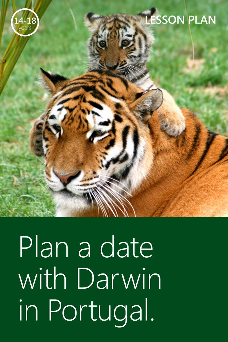 This lesson plan is the perfect complement to your high school or college biology curriculum! Visit the Lisbon Zoo and teach your class about Darwin's theory on animal evolution during a virtual field trip from #MSFTEDU.