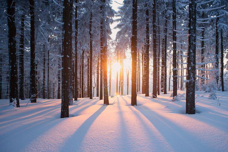 Fototapeten Kinderzimmer G?nstig : Unsere Fototapeten sorgen f?r ordentliche Winterzeit. #Schneetapete