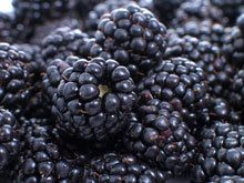 Thornless Blackberry for Sale