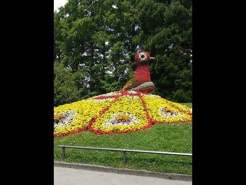 A Virágutazó youtube csatornán (www.youtube.com/viragutazo) Nagy Juco (www.facebook.com/nagyjuco) virágkötő informatikus, a virágok és utazások szerelmese le...