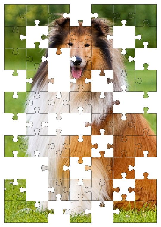 Free Jigsaw Puzzle Online - Collie Dog