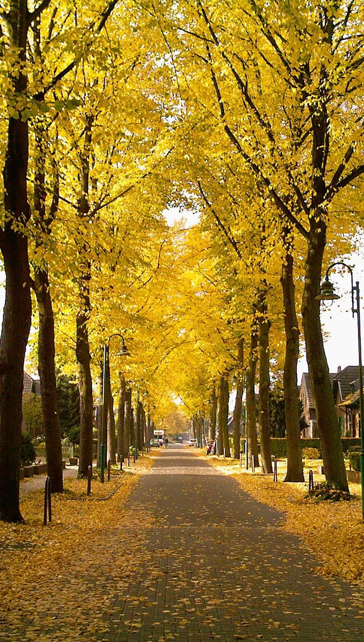my favorite season autumn essay Very short essay on spring season category: so spring is my favorite season short essay on the autumn season.