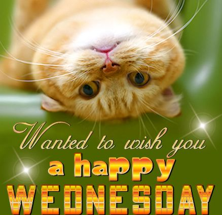 Happy Wednesday Quotes Cute Wednesday Hump Day Wednesday Happy