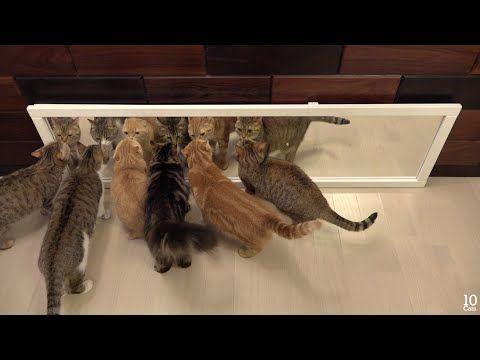 Cats Playing Jenga Gif