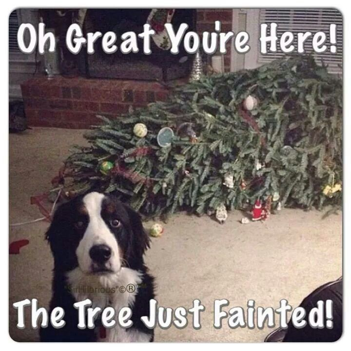 The tree just fainted!