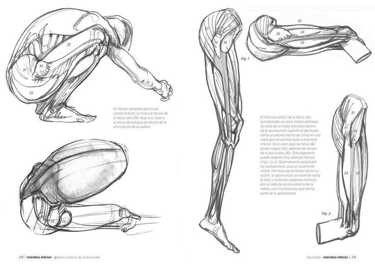 Anatomía artística - Michel Lauricella - Editorial Gustavo Gili