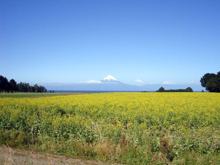 Entre Frutillar y Llanquihue, al fondo volcán Osorno