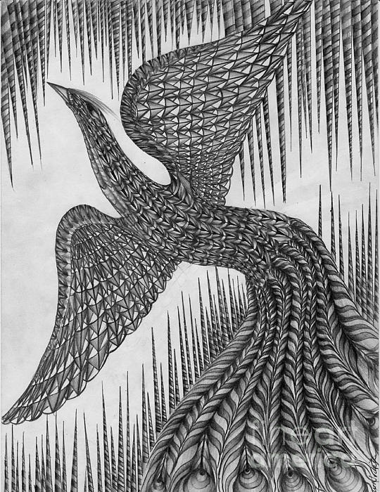 'Peacock' Fine Art Pencil drawing by Anca S.    Wonderful unique pencil drawings by Anca.