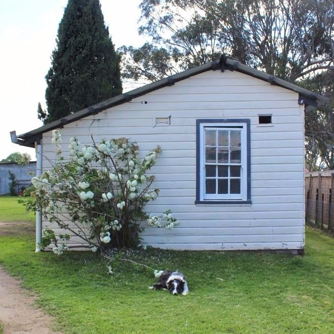 I love the simple things.  They make me happy.  My back shed, puffball tree and Kevin the very alert guard dog.