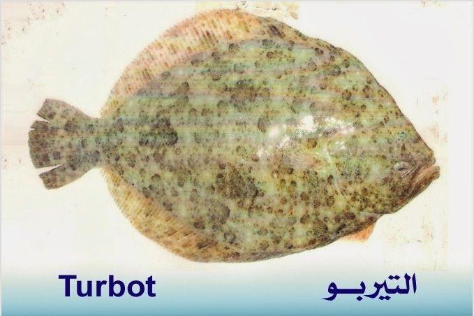 تعريف اسماء الاسماك بدلجة المغربية و الفرنسية البحار المغربي Fish Beef Food