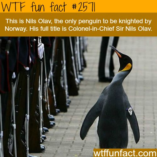 25+ best ideas about Interesting facts about penguins on Pinterest ...