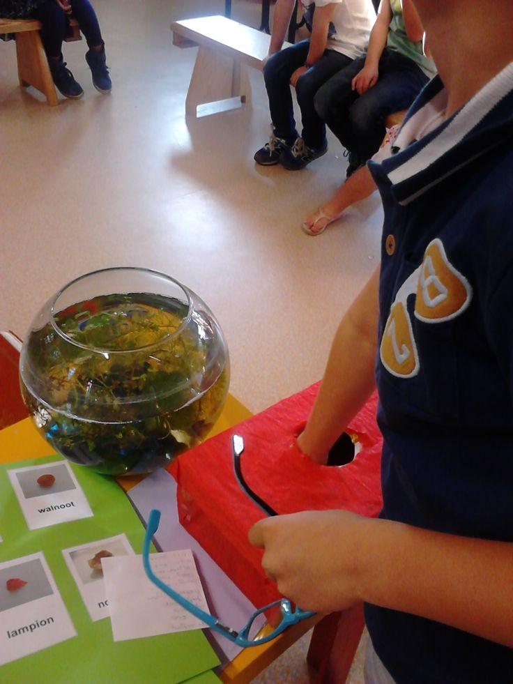 Thema herfst groep 1/2; voeldoos.  Doos gevuld met bladeren en allerlei herfstvruchten en noten.  Autumn sensory box.