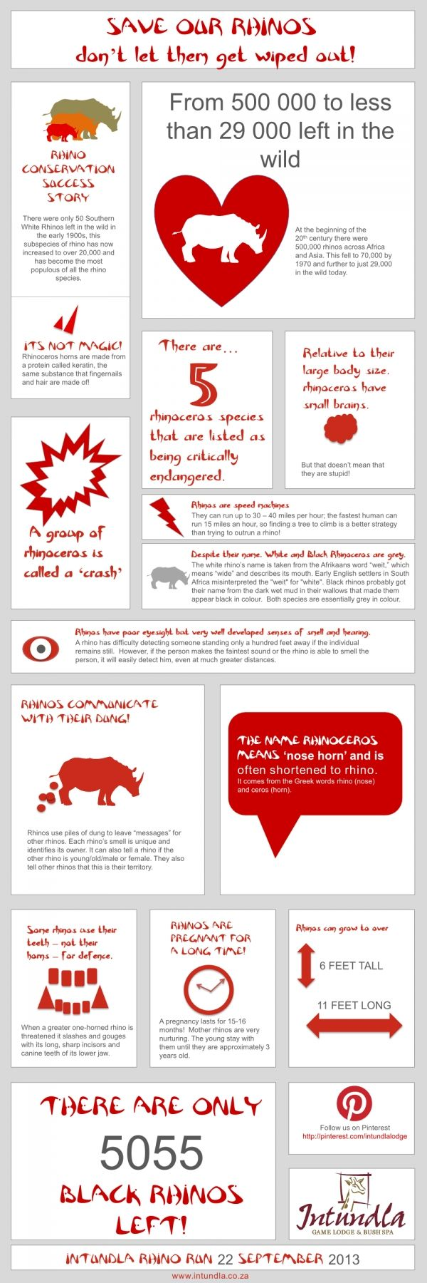 SAVE OUR RHINOS! - an infographic by Intundla for the Gauteng Rhino Run 22 September 2013.