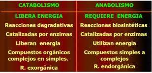 10 - CURSO 02 - ENERGIA Y METABOLISMO - El metabolismo se divide en dos procesos conjugados: catabolismo y anabolismo. Las reacciones catabólicas liberan energía; un ejemplo es la glucólisis, un proceso de degradación de compuestos como la glucosa, cuya reacción resulta en la liberación de la energía retenida en sus enlaces químicos.