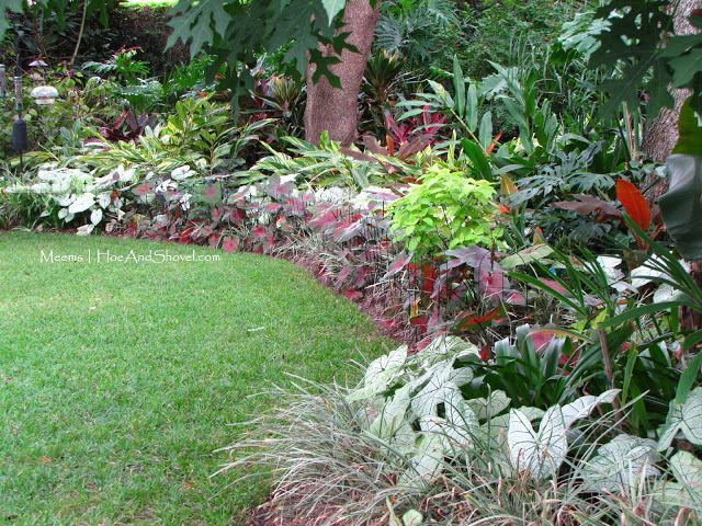 This will work with existing landscaping for my front yard -  Tropical garden inspiration - 'Postman Joyner' caladium, 'Siam Ruby' ornamental bananas, variegated shell ginger (Alpinia), and Cordyline