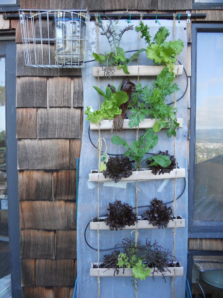 DIY gravity-fed drip irrigation system for a vertical garden