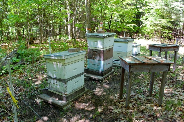 Deerhurst Resort's beehives where honeycomb is gathered to make Poppa Jim's wildflower honey.