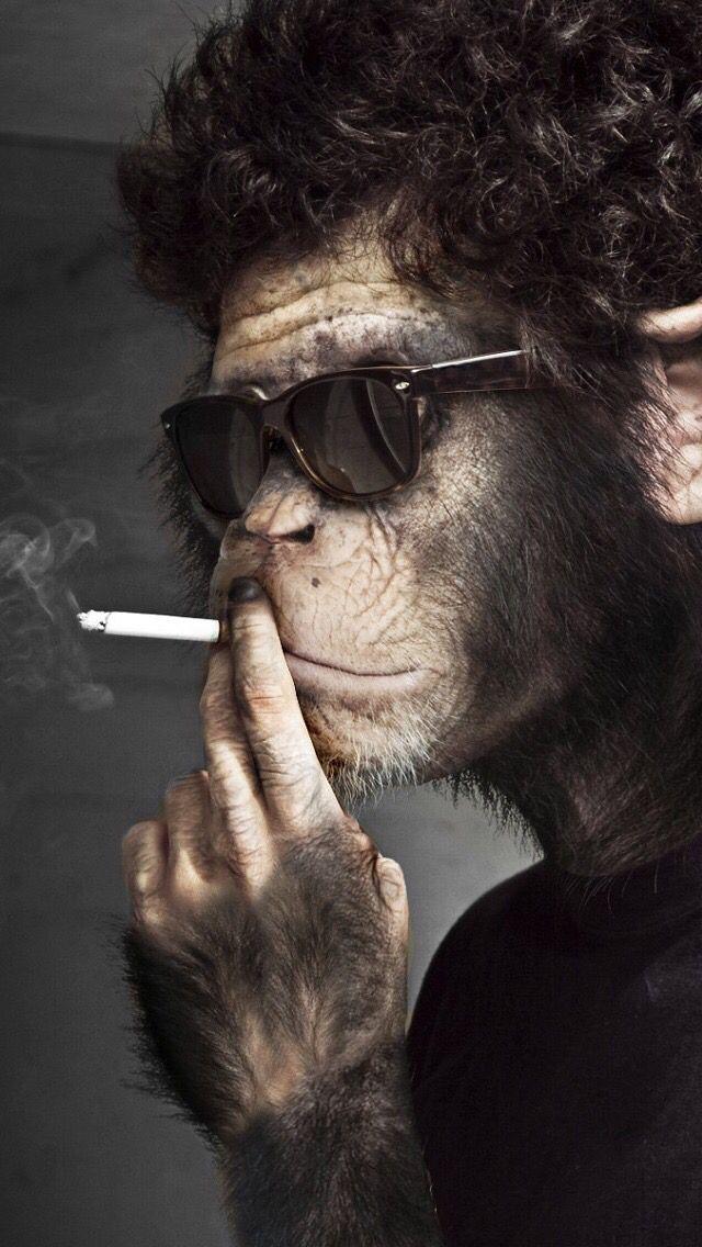 Phone Wallpaper Hd In 2019 Monkey Monkey Wallpaper
