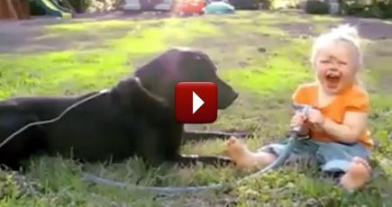 Babies and Dogs Become Best Friends for a Reason - They LOVE Each Other - Funny Video